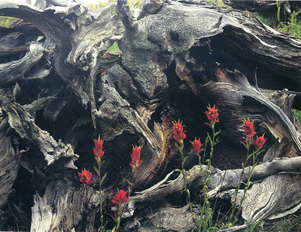 Дэвид Мюнх. Красные цветы