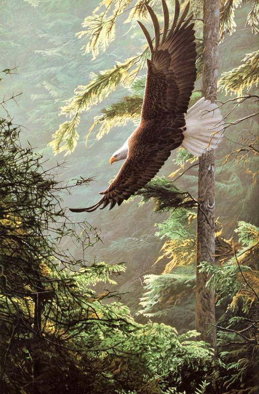 Рон Паркер. Белоголовый орлан