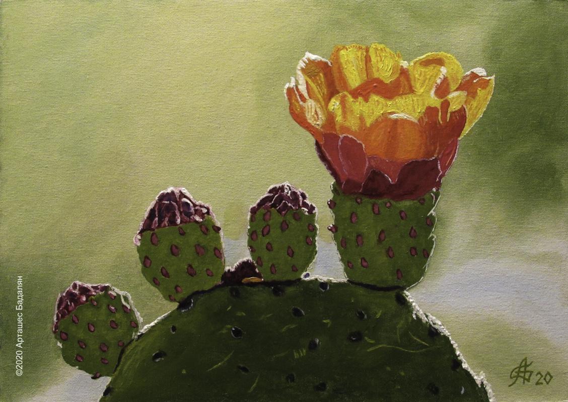 Artashes Badalyan. Blooming cacti-3 - x-hardboard-m - 25x35