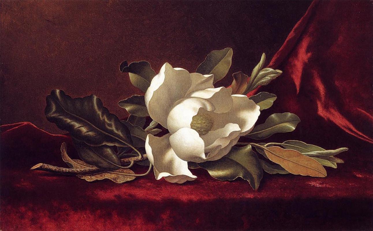 Martin Johnson Head. Magnolia on red velvet