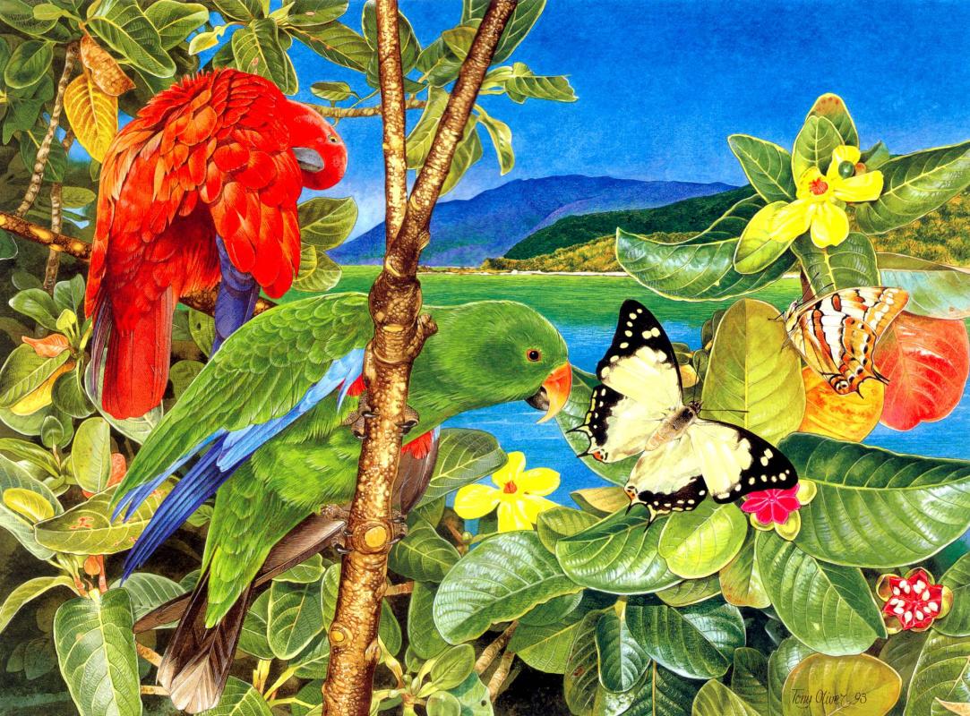 Тони Оливер. Благородный зелёно-красный попугай