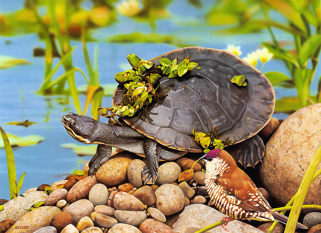 Ego Guiotto. Short-necked turtle