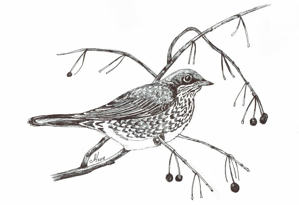 Marina Bocharova. Fieldbird
