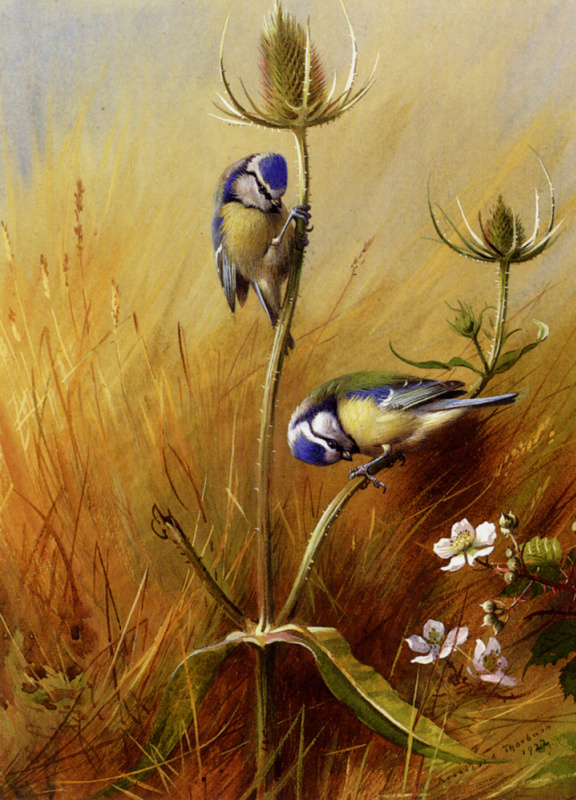 Арчибальд Торберн. Птицы