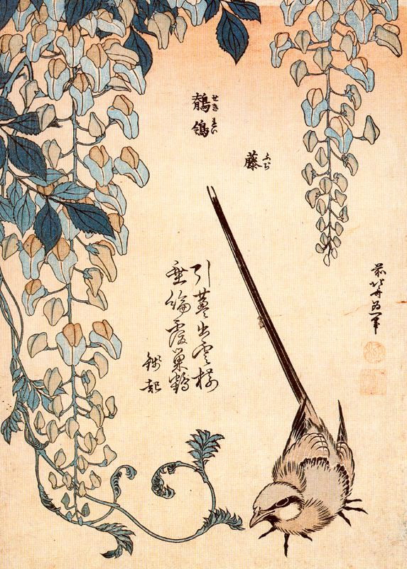 Katsushika Hokusai. Wagtail and Wisteria