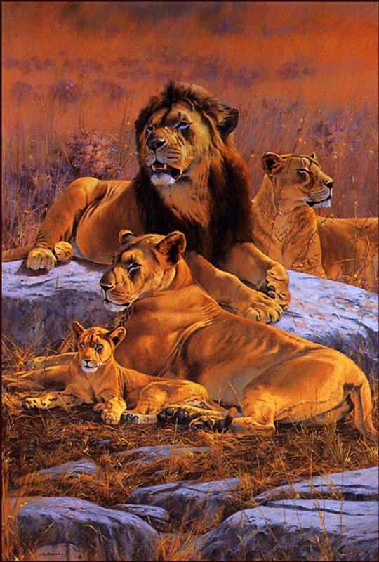 Ким Дональдсон. Львиное царство