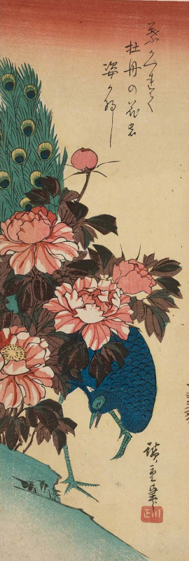 """Utagawa Hiroshige. Peacock on the slope and peonies. Series """"Birds and flowers"""""""