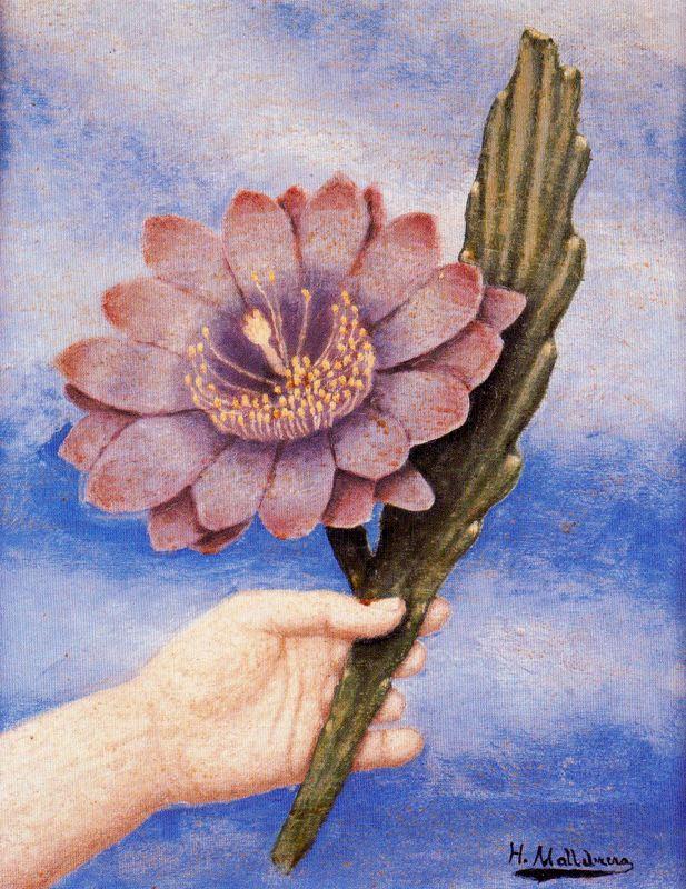 Хигинио Маллебрера. Большой цветок