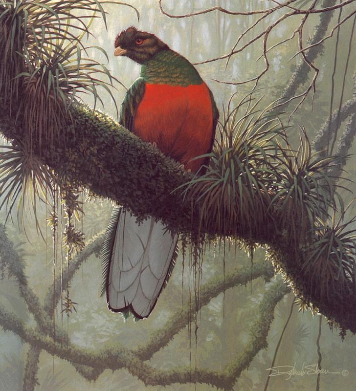 Ричард Слоан. Утро в джунглях