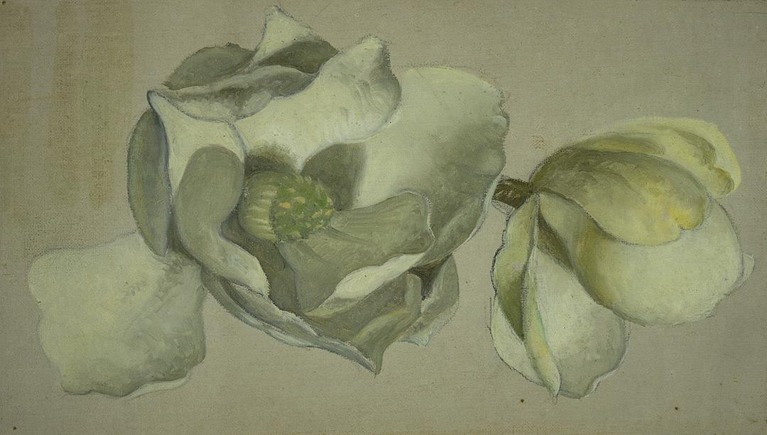 Martin Johnson Head. Two flowers of magnolia. Sketch