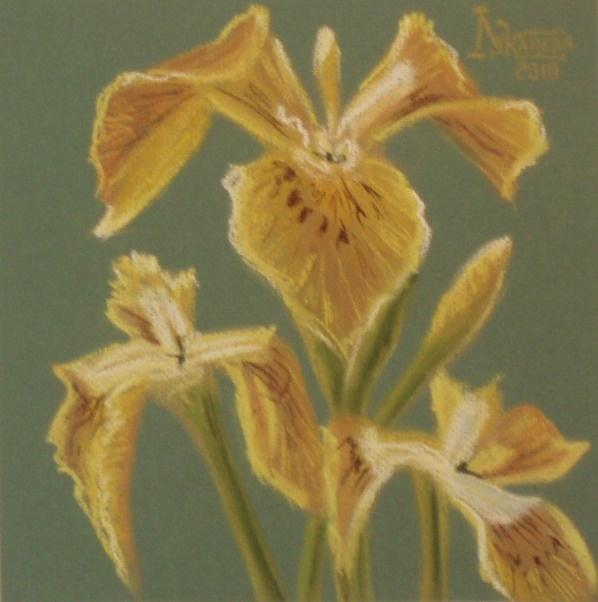 Larissa Lukaneva. Swamp iris