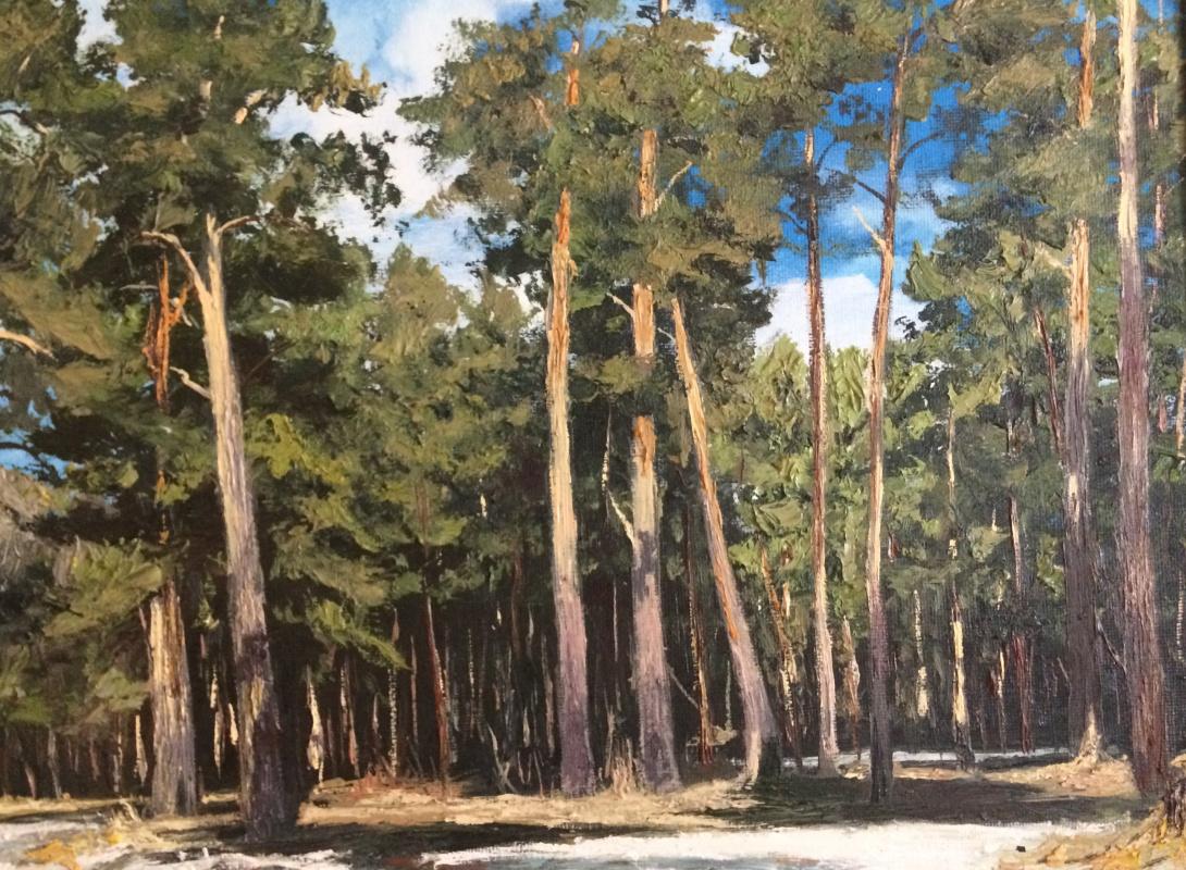 Unknown artist. Pine forest in spring
