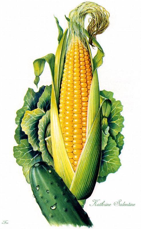 Катрин Салентайн. Кукуруза