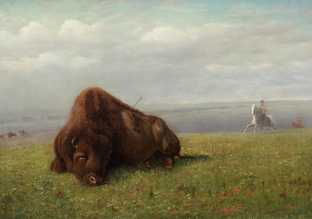 Альберт Бирштадт. Охота на бизона
