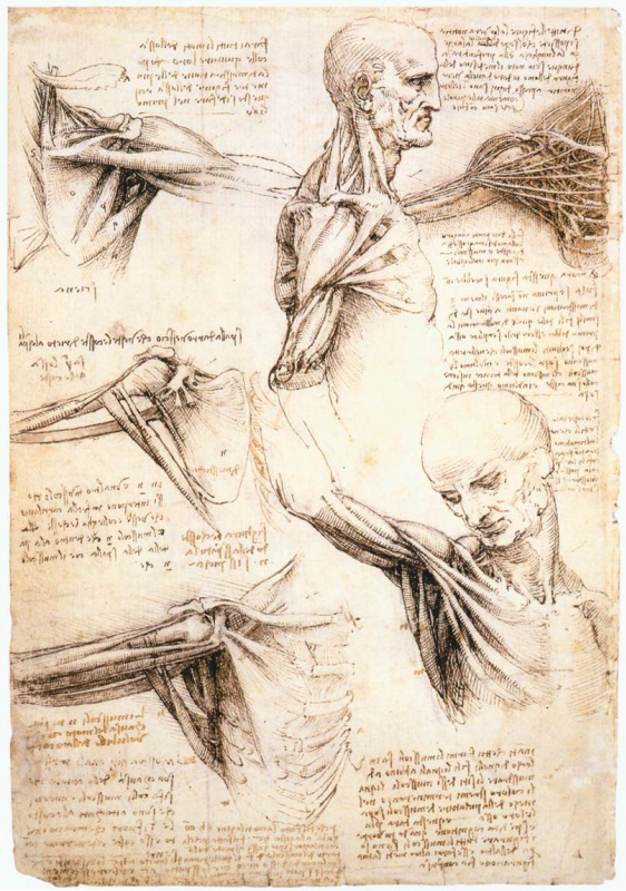 Leonardo da Vinci. Anatomic drawings of the shoulder