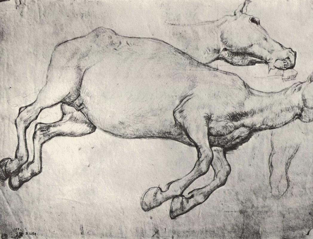 Теодор Жерико. Этюд мертвой лошади