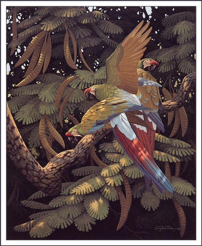 Ричард Слоан. Фасолевое дерево