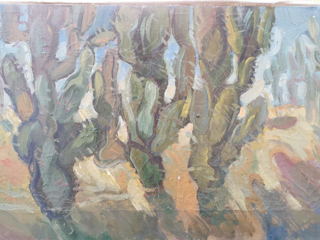Golovachev M.. Cacti