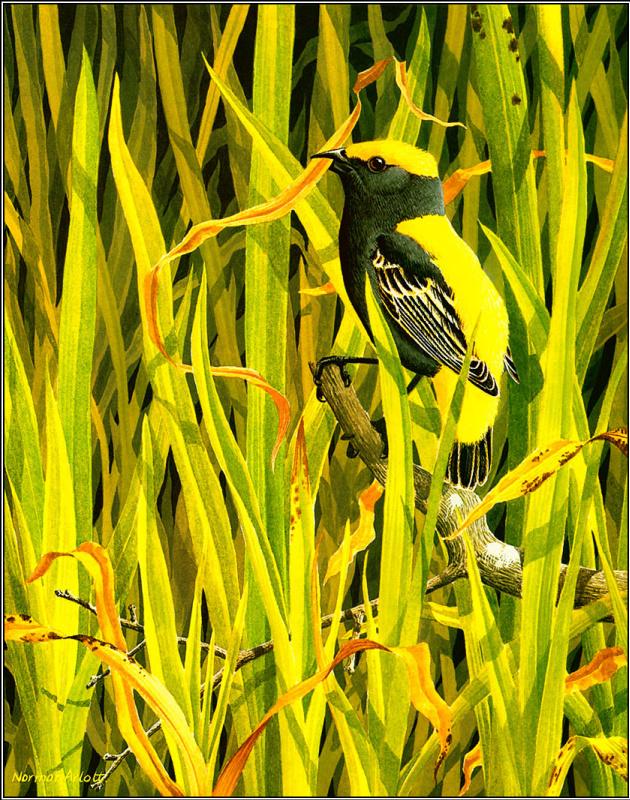 Норман Арлотт. Желтая птица