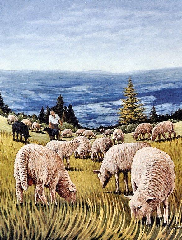 Алена Гейн. Пастух и овцы