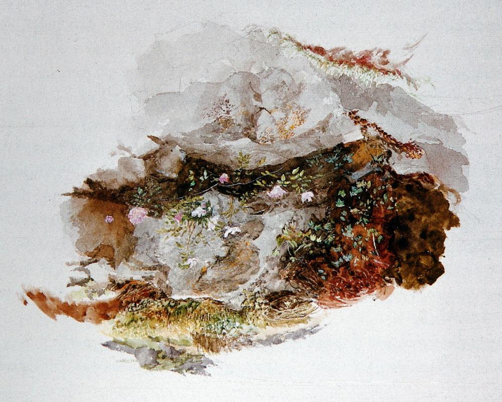 Джон Рёскин. Фрагмент пейзажа: цветы и камни
