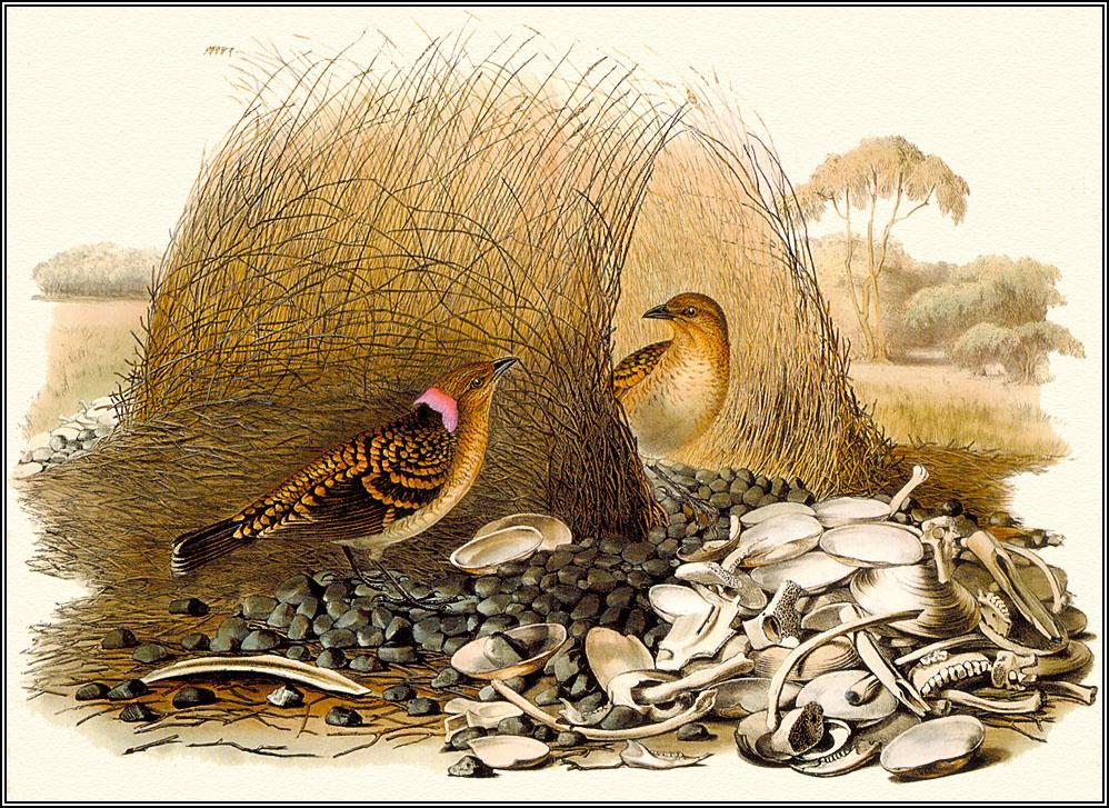 Пенни Олсен. Пятнистые птицы
