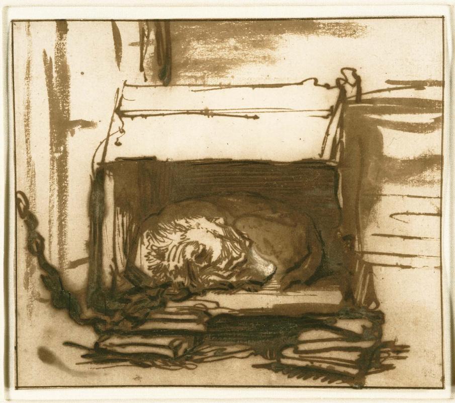Рембрандт Харменс ван Рейн. Спящая собака