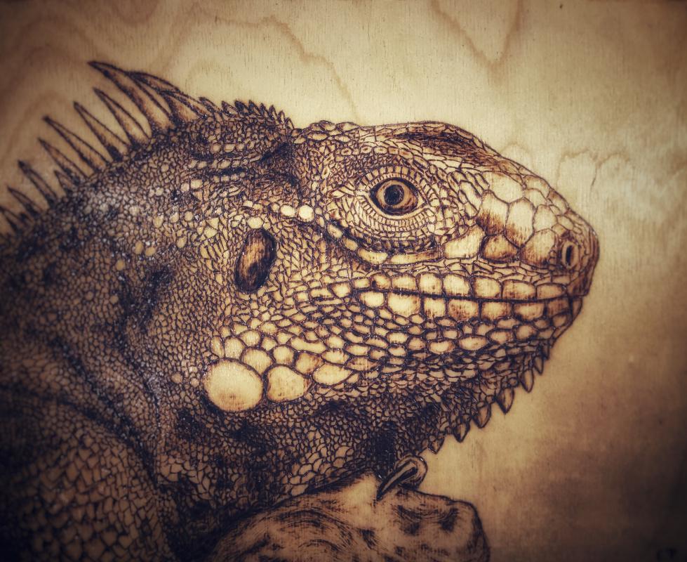 Unknown artist. Iguana