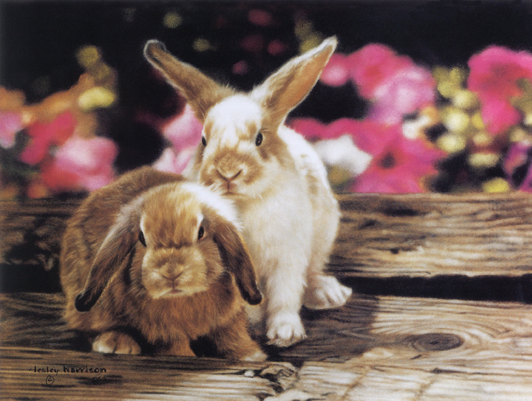 Лесли Харрисон. Кролики и петунии