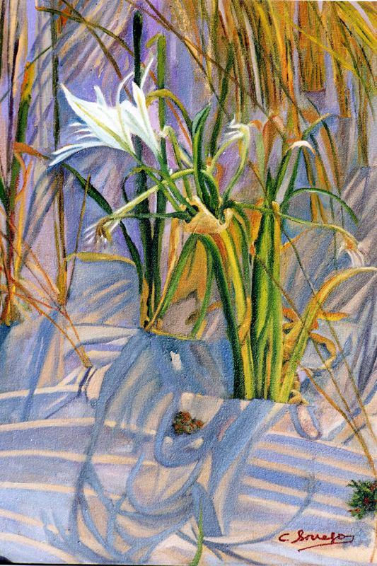 Боррего Руис. Белые цветы