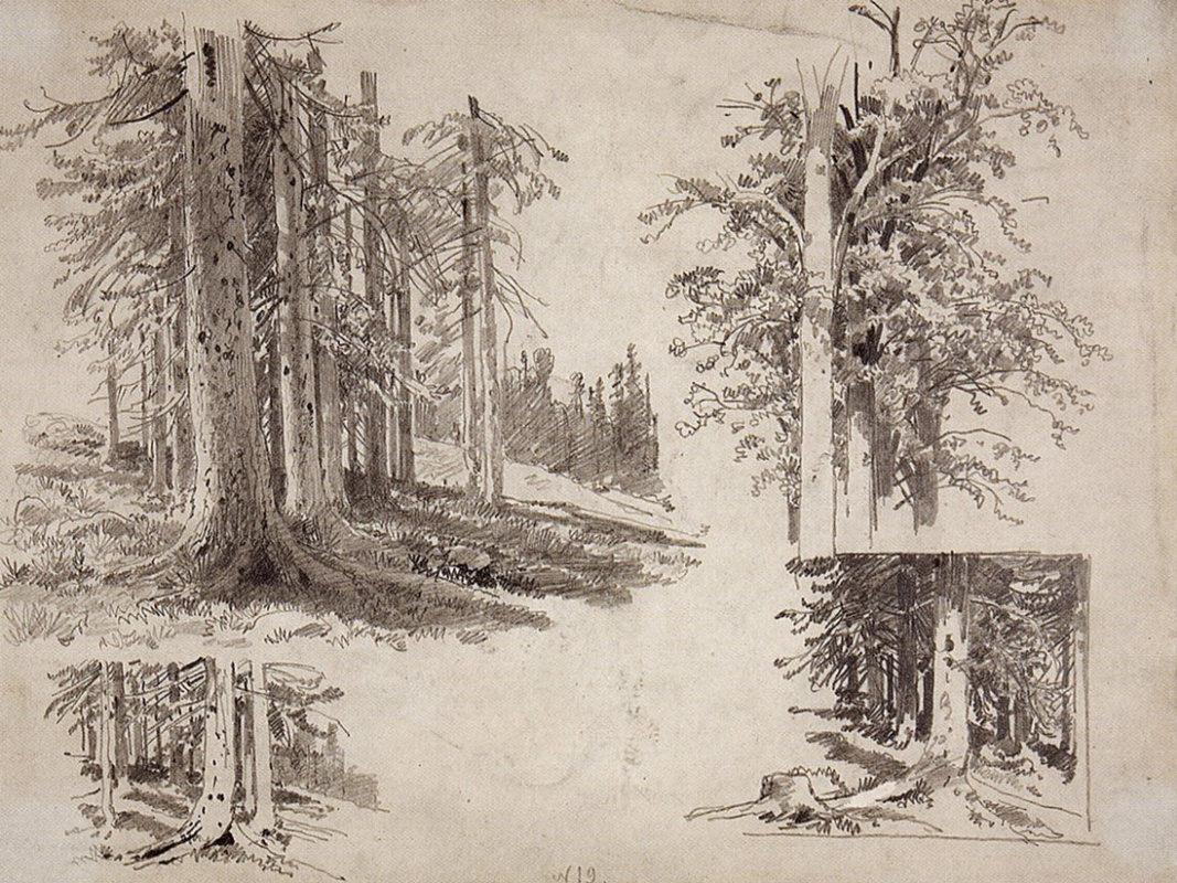 Ivan Shishkin. Sketches of trees