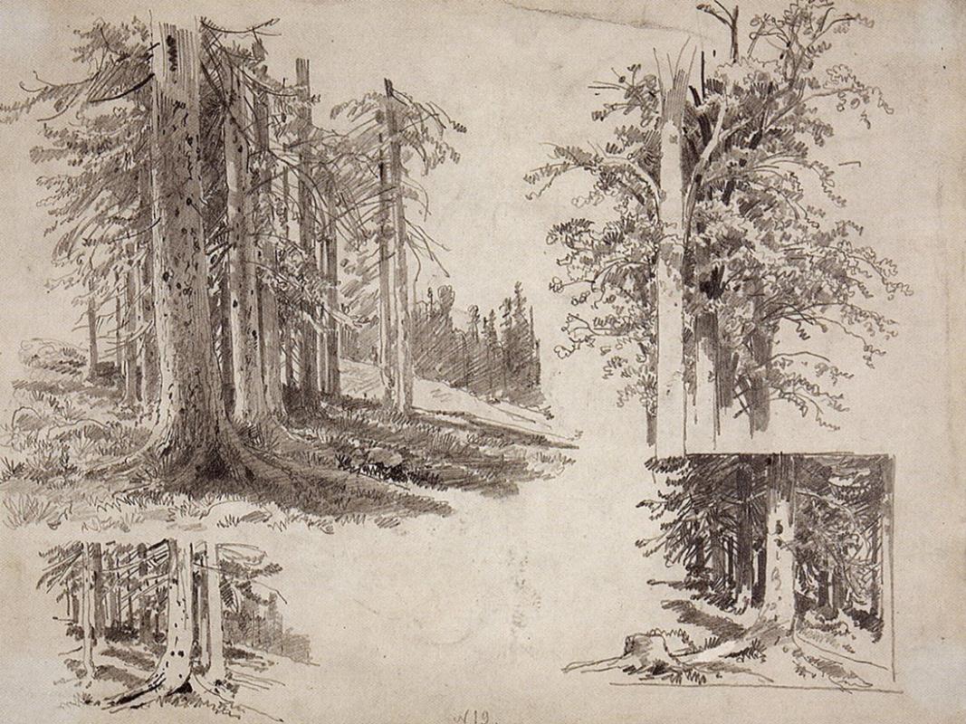Иван Иванович Шишкин. Этюды деревьев