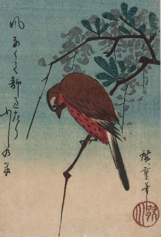 Utagawa Hiroshige. Bird on a branch of Wisteria