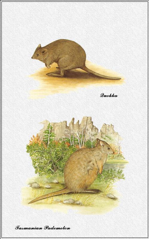 Марион Уэстмакотт. Австралийские млекопитающие 37
