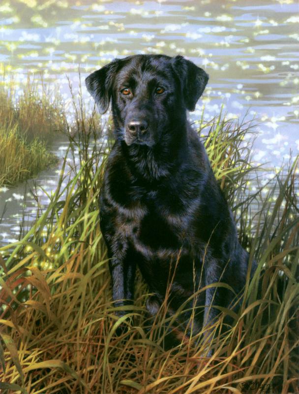 Бонни Маррис. Черный пес