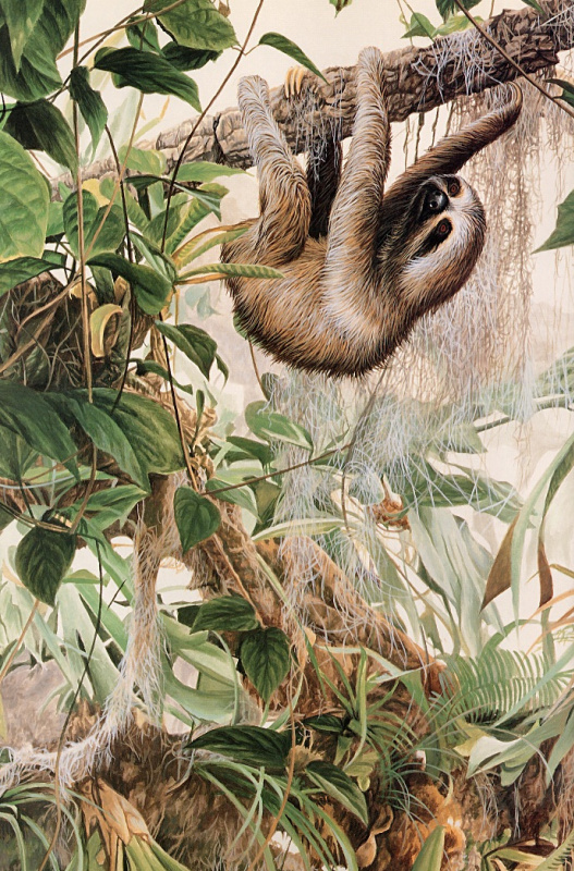 Рон Паркер. Трехпалый ленивец