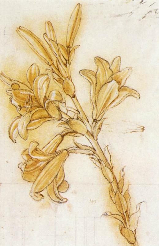 "Leonardo da Vinci. Sketch of lilies for ""Annunciation"""