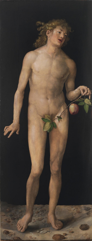 Albrecht Durer. Adam