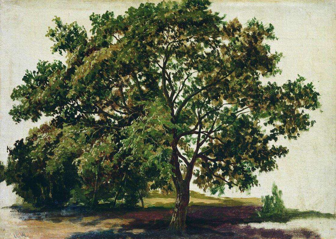 Ivan Shishkin. Oak