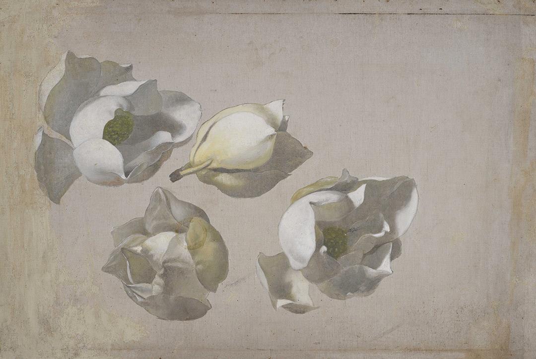 Martin Johnson Head. Four buds of magnolia. Sketch