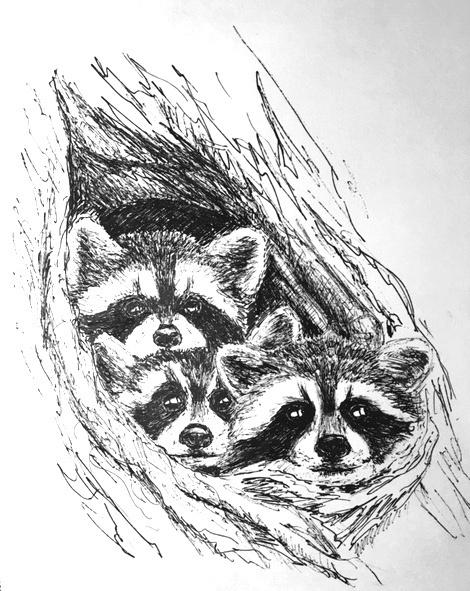 Tatiana Lagunova. Raccoons