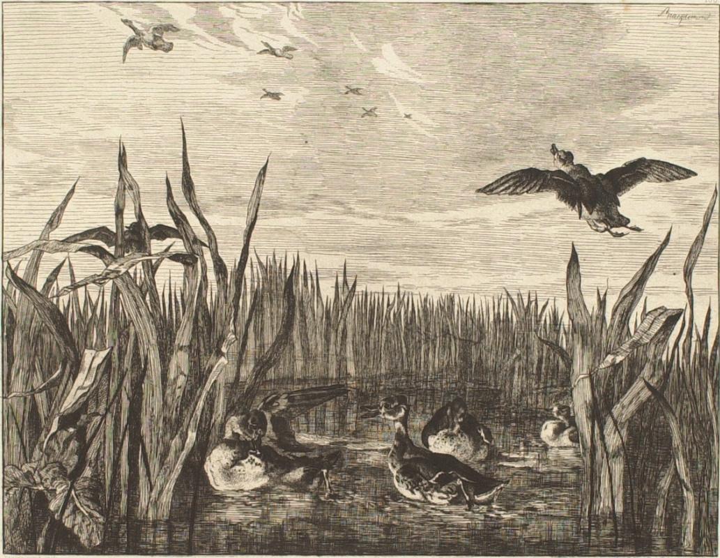 Felix Brakemon. Ducks