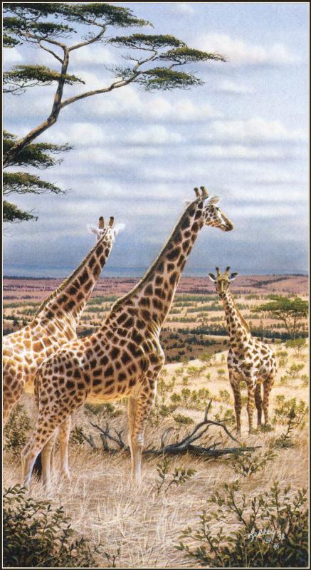 Рик Келли. Жирафы в Серенгети