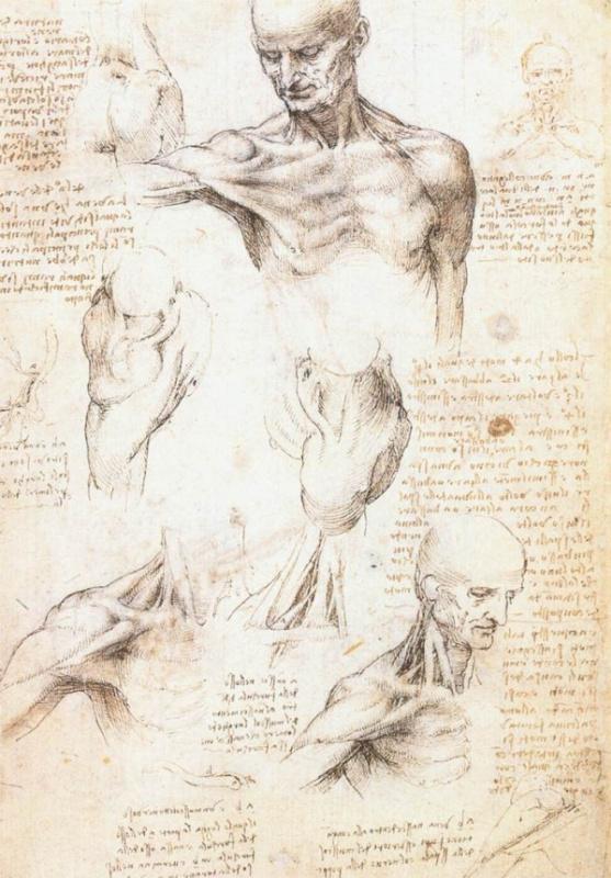 Леонардо да Винчи. Анатомические зарисовки плеча мужчины