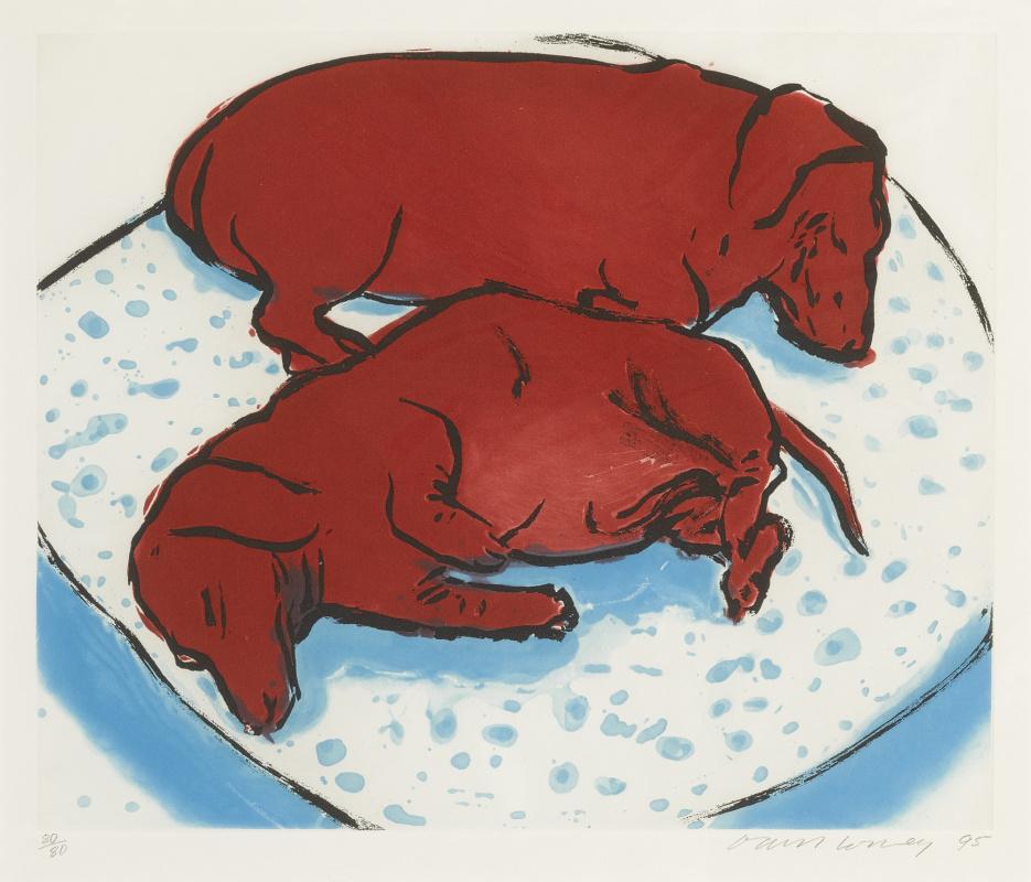 David Hockney. Horizontal dog