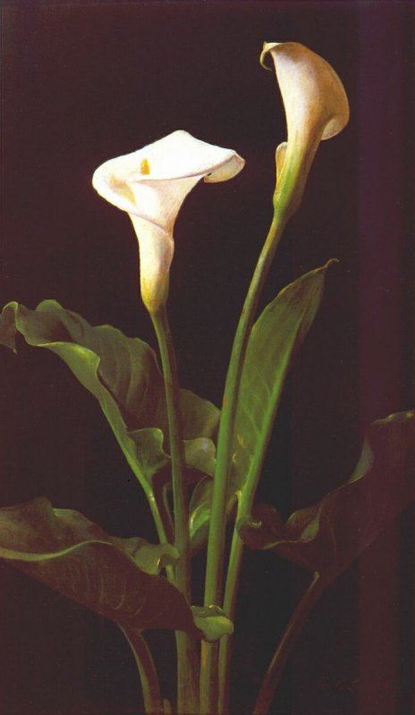 Джордж Кокран Ламбдин. Белые цветы
