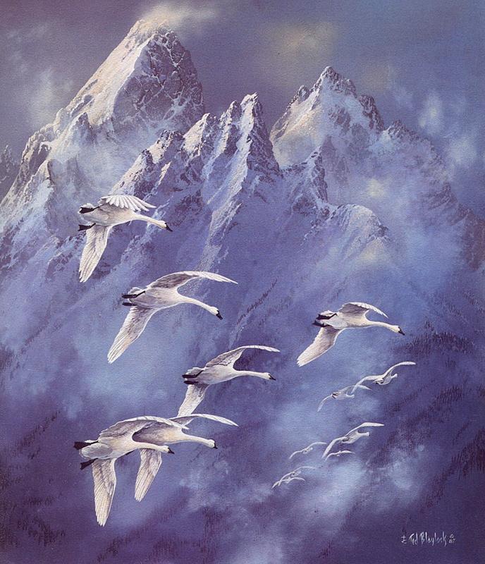 Тед Блейлок. Лебеди