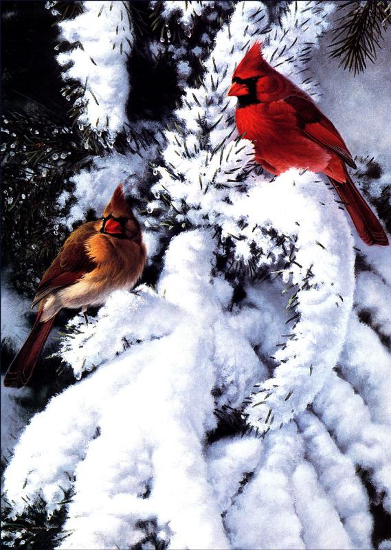Марк Хэнсон. Птицы на снегу
