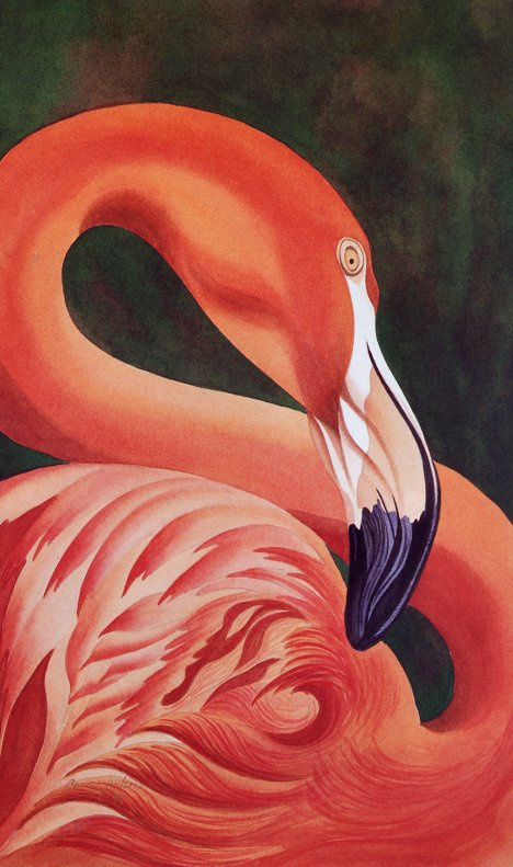 Candy Wilson. Flamingo