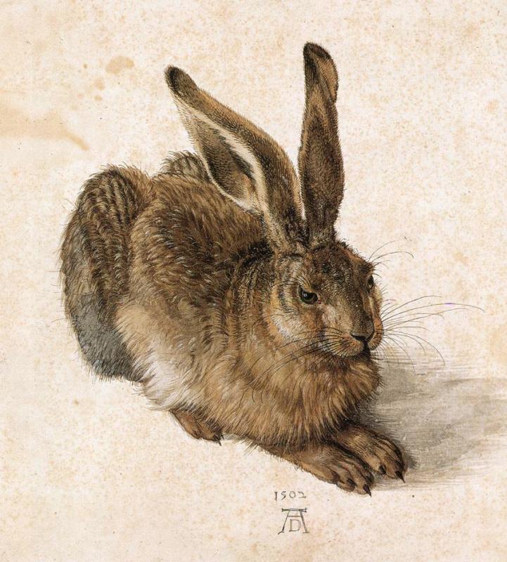 Albrecht Dürer. Young hare